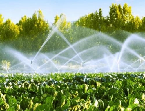 ¿Qué sistema de riego es el más adecuado para ti? ✅