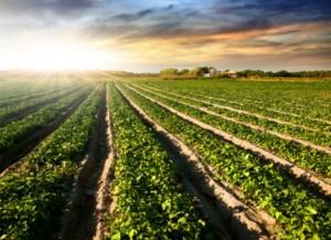 tierra cultivada