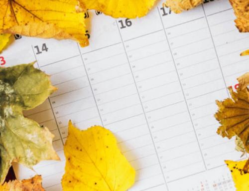 Calendario de siembra y cosecha según estación