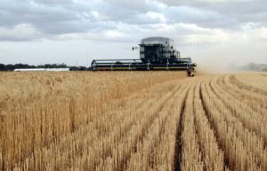 imagen 4 agricultura de plantación