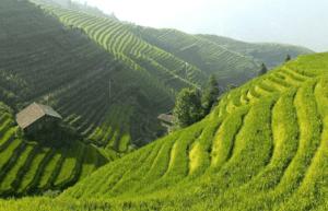 imagen 5 agricultura de plantación