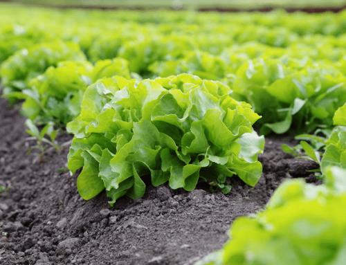 Agricultura ecológica, una alternativa sustentable para todos