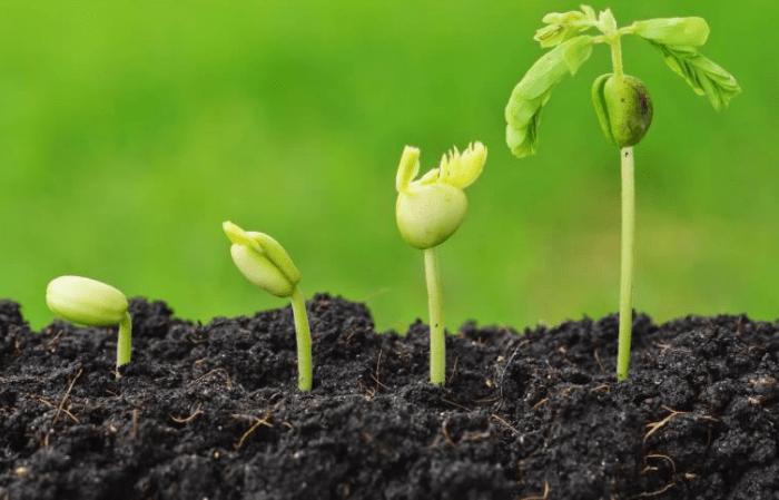 Calendario de plantacion de vegetales y hortalizas 1
