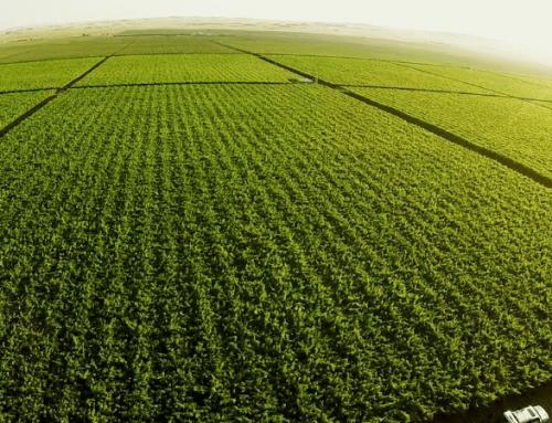 Agricultura extensiva ¿Qué es y Cómo Gestionarla?