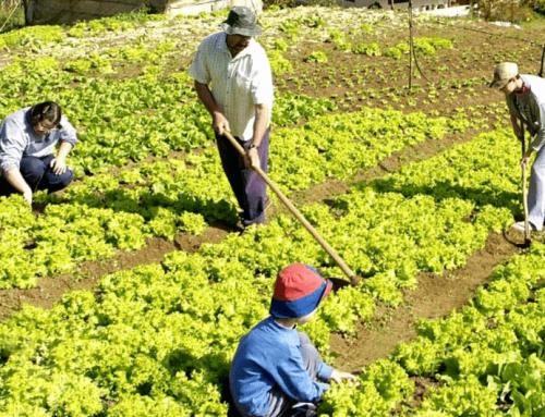 Agricultura de Subsistencia ¿Qué es y Cómo Gestionarla?