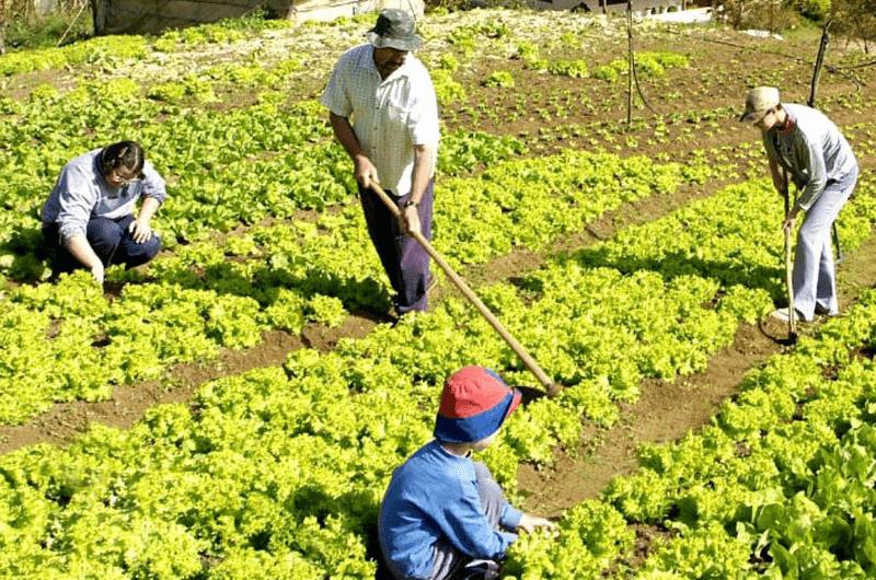agricultura familiar y de subsistencia
