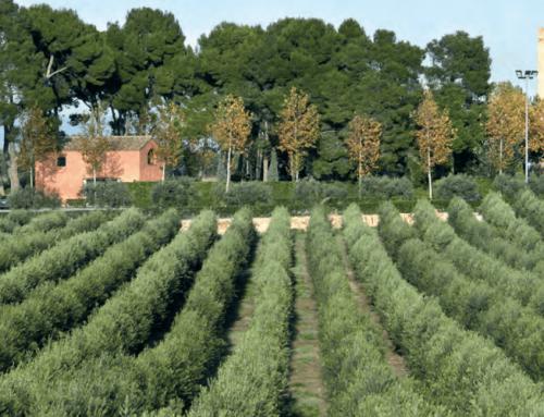 Agricultura de secano ¿Qué es y cómo gestionarla?