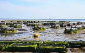 Antibioticos permitidos en acuicultura