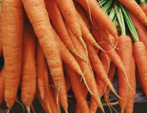 ¿Cómo Cultivar Zanahoria en España?