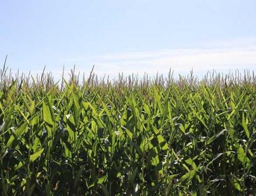 Beneficios del sistema EBD en la Agricultura