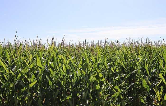 aumentar la productividad agricola con sistemas EBD