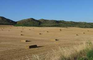 Agricultura en Espana